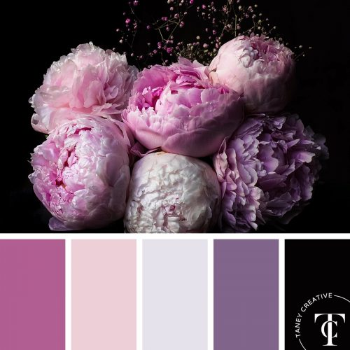 Peonies Color Palette by Taney Creative@1x