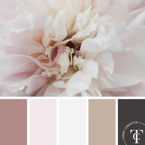 Peony Color Palette by Taney Creative@1x