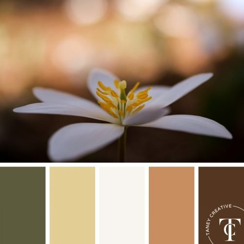 Spring Color Palette by Taney Creative@1x