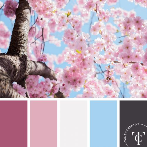 Spring Pink Tree Blossoms Color Palette by Taney Creative@1x